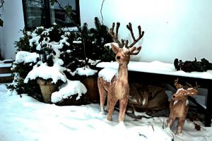 Schnee und Hirsch vor dem Bed & Breakfast Hotel Albertine