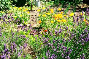 Unterkunft mit Sommerblumen im Garten im Albertine Bed and Breakfast
