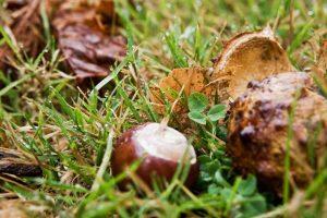 Herbst mit Kastanien vor BB Albertine