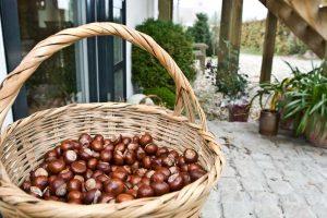 Dekorationen der Natur mit Kastanien im Bed and Breakfast Hotel Albertine